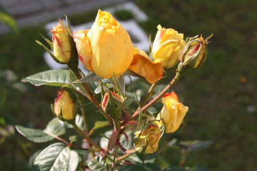 flowers belarus nature
