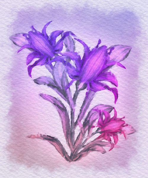 gėlės,gėlė,purpurinė gėlė,rožinė gėlė,augalas,violetinė,rožė,rožinis,piešimas,puokštė,violetinė,purpurinė žydėti,floristika