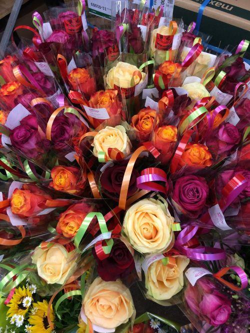 flowers roses flower