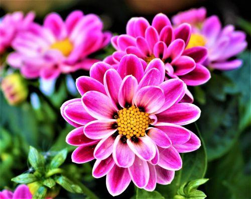 flowers petal flowering