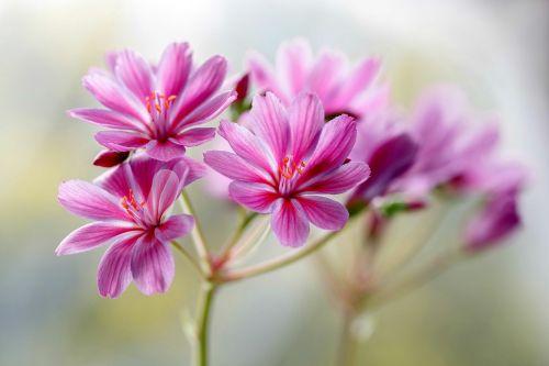 flowers violet floret