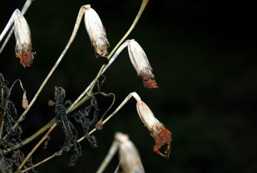 flowers wilted flowers dry