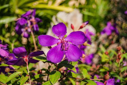 flowers purple flower