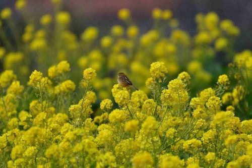flowers field plant