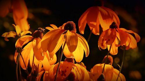 flowers orange orange petals