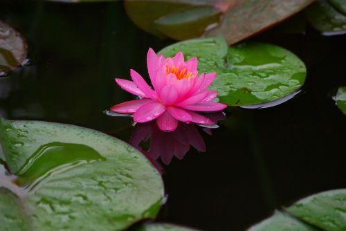 flowers leaf nature