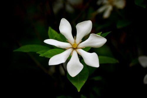 flowers nature leaf
