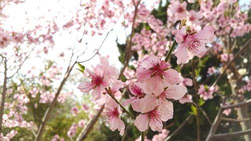 flowers  plants  quarter