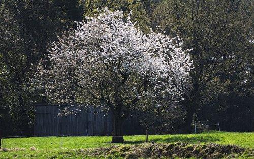 flowers  tree  meadow