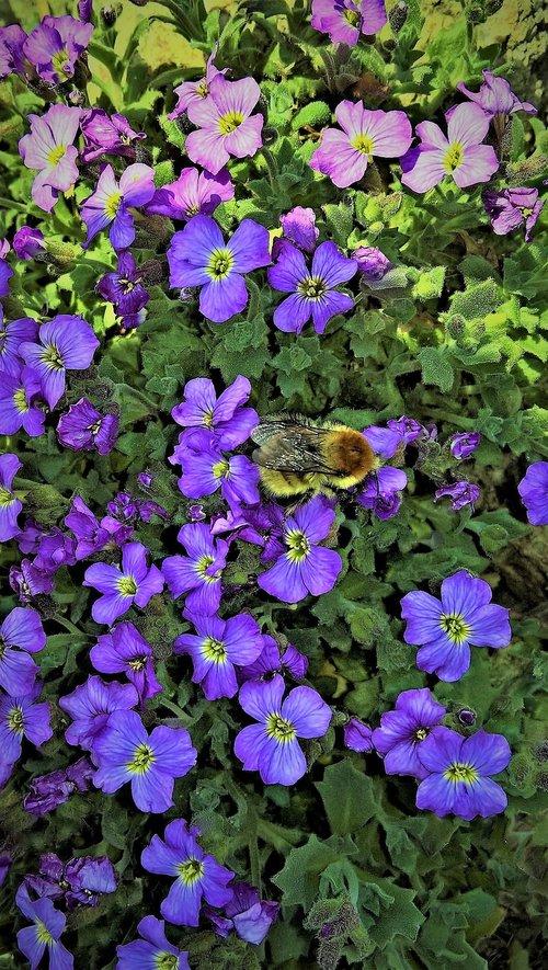 flowers  blue pillow  rock garden flowers