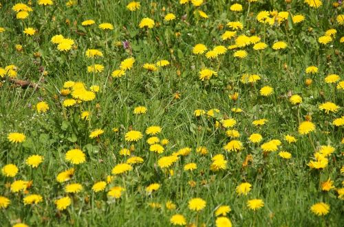 flowers plant medicinal products