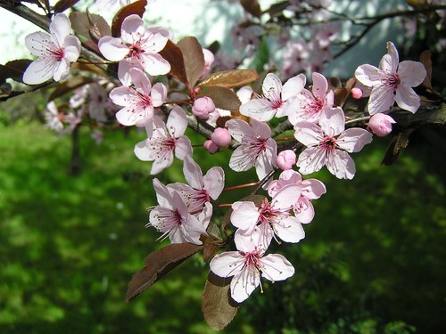 flowers  trees  spring