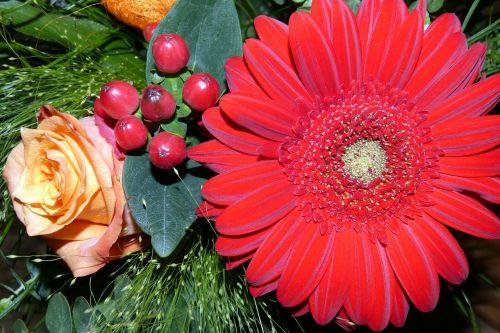 flowers gerbera rose