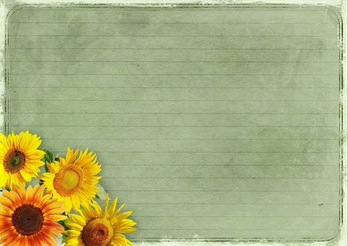 flowers  frame  sunflower