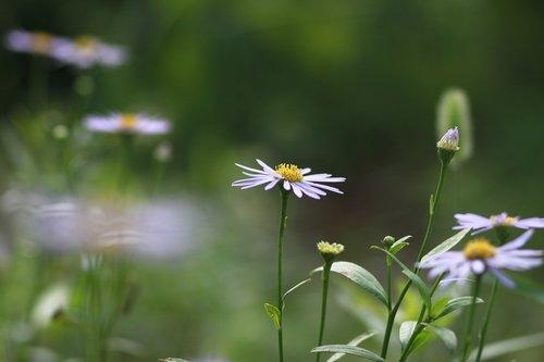 flowers  plants  nature