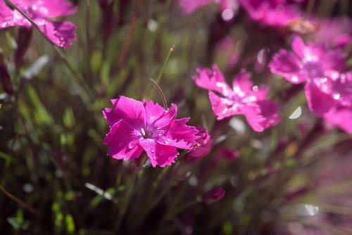 flowers  pink  pink flowers