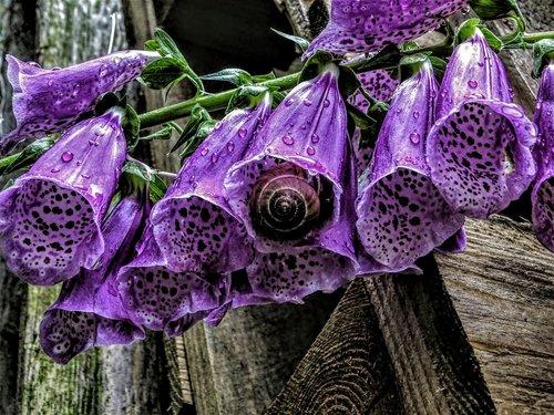 flowers  thimble  natural tur