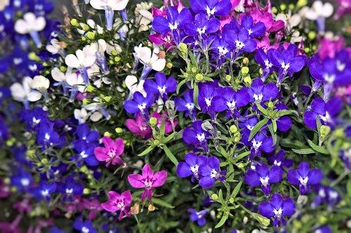 flowers  praise lien  although