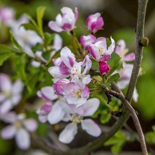 flowers  trees  stems