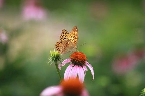 flowers  nature  plants