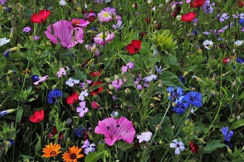 flowers  meadow  garden
