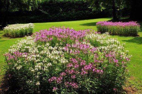 flowers  garden  flower beds