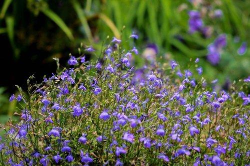 flowers  flowers of the field  meadow