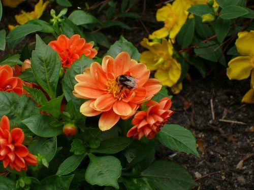 flowers as lien orange