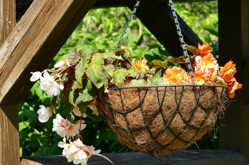 flowers  hanging traffic lights  basket