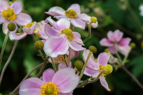 flowers  plant  summer