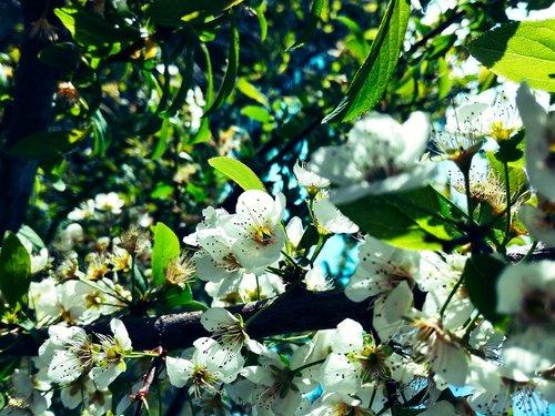 flowers  tree branch  spring