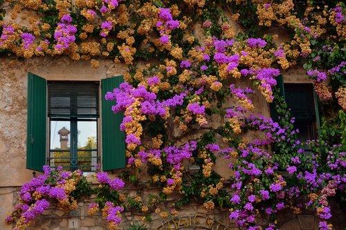 flowers  wall  window