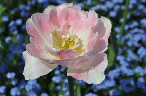 flowers blossom bloom