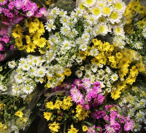 flowers  pink  yellow