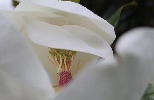 flowers  garden  petals