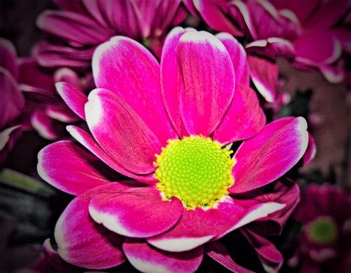 flowers  herbstastern  bouquet