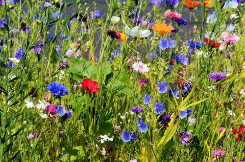 flowers blütenmeer bloom