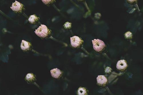 flowers  gems  bloom