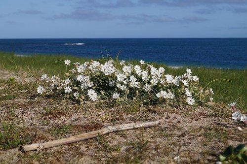 flowers  beach  sea
