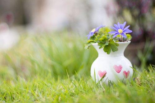 flowers  grass  pot