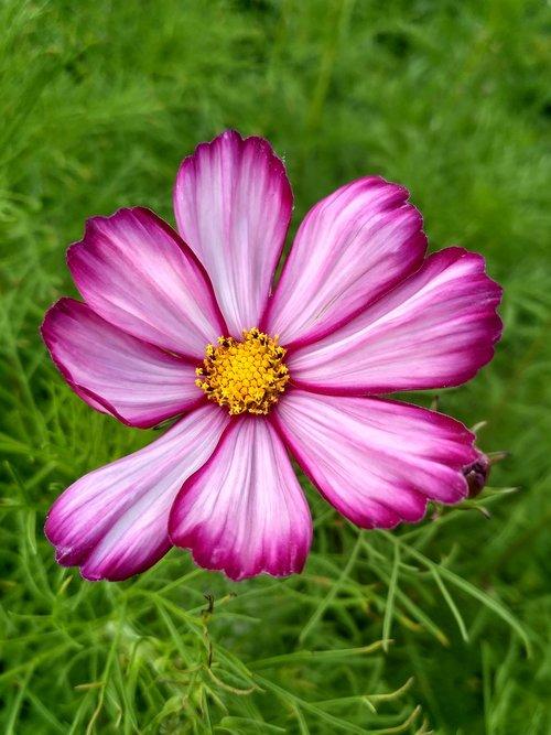 flowers  flora  summer