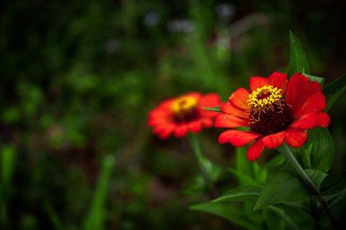 flowers  blur  garden