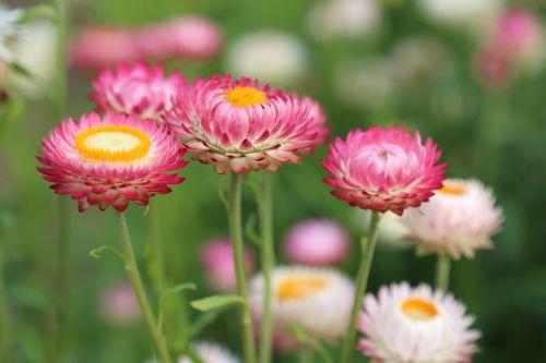 flowers flower meadow summer