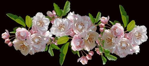 flowers  crabapple  blossom