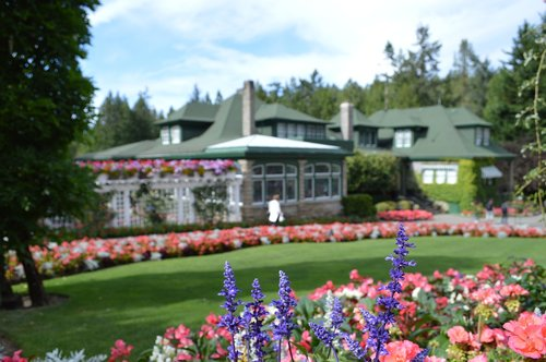 flowers  butchart gardens  vancouver island