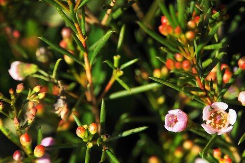 flowers  blütenzauber  plant