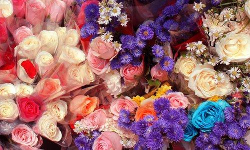 flowers  plant  nature