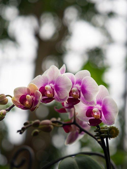 flowers  focus  purple