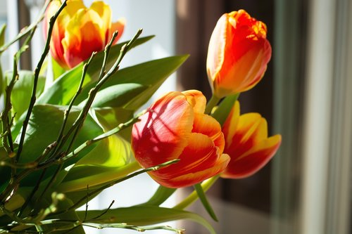 flowers  bouquet  tulips