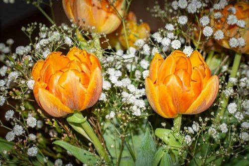 flowers  tulips  orange